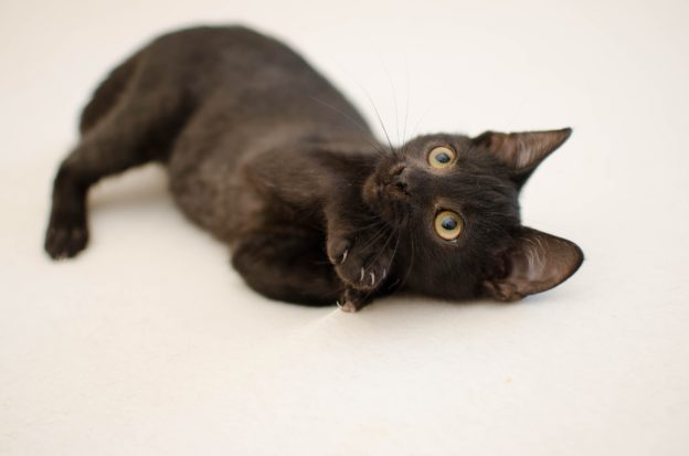 How to Relieve Arthritis Pain in Cats