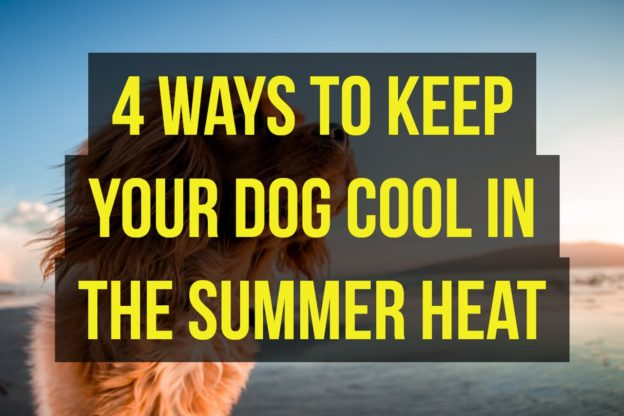 4 Ways to Keep Your Dog Cool in The Summer Heat