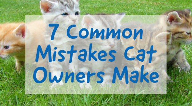 Common Mistakes Cat Owners Make