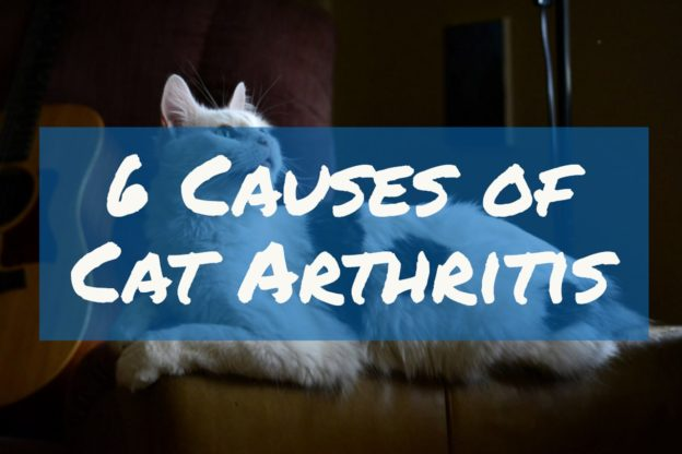 What Causes Cat Arthritis