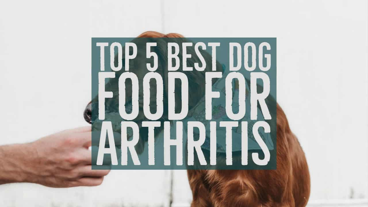 What Dog Food Helps With Arthritis
